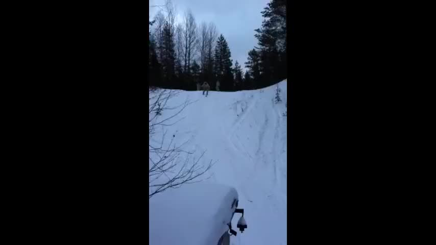permissible shocking Tarsier. .. Finnish army skis are horrible, so that was quite a feat.