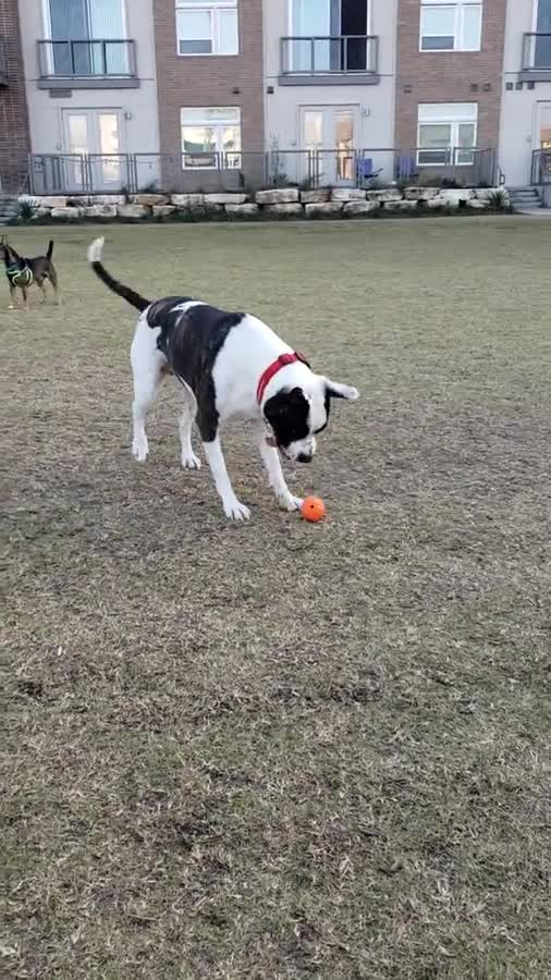 Park dogs. So people asked me to post the dogs at the park I work in. Here are just a few. join list: ParkDogs (55 subs)Mention History This is Aquilla, she has