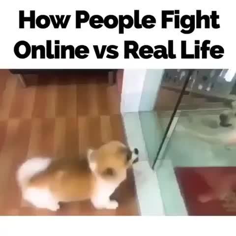 fight. .