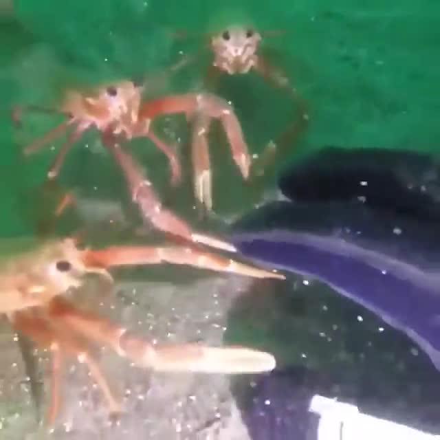 crab crab crab. .. HEY REGINALD!!! I found your kids