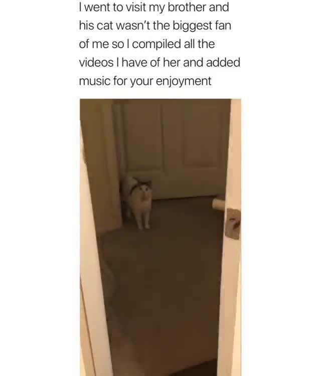 spooppy cat. .. The suspense...
