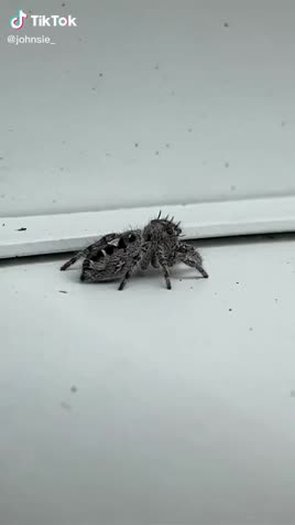 spiderbro!. join list: DoseOfCuteness (409 subs)Mention Clicks: 34265Msgs Sent: 357088Mention History.