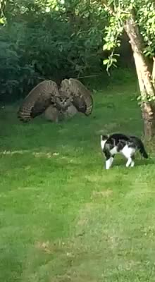 Floof vs Poof. .. If that's your cat why are you just filming it you faggot, go in there and protect your retard