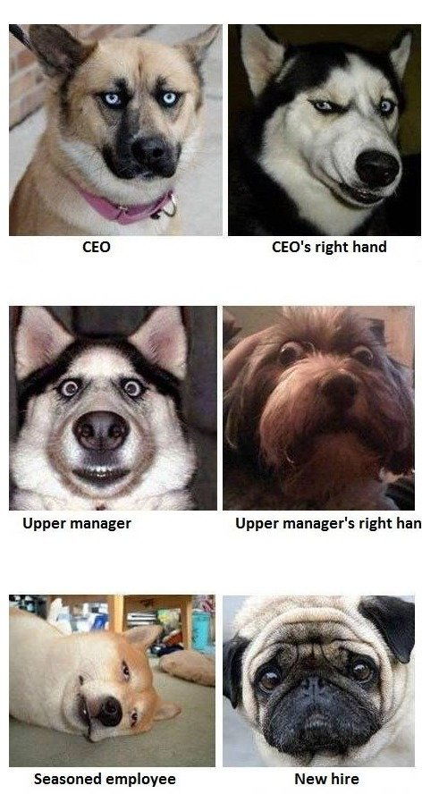 a typical company. . Upper manager' s right hm Seasoned employee
