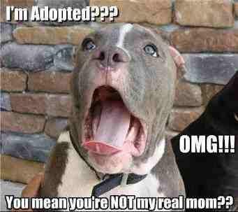 Adopted ?. . mean Hut Pu' ,