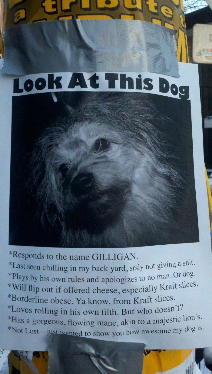 awesome dog. check out this dog. <br /> hes awesome. idiiot? ittl, in Cir) my lit! littl, { ilialiali iii ii Em 'kl Tll 'ittl billbill. 11% tn r. tux Bigi
