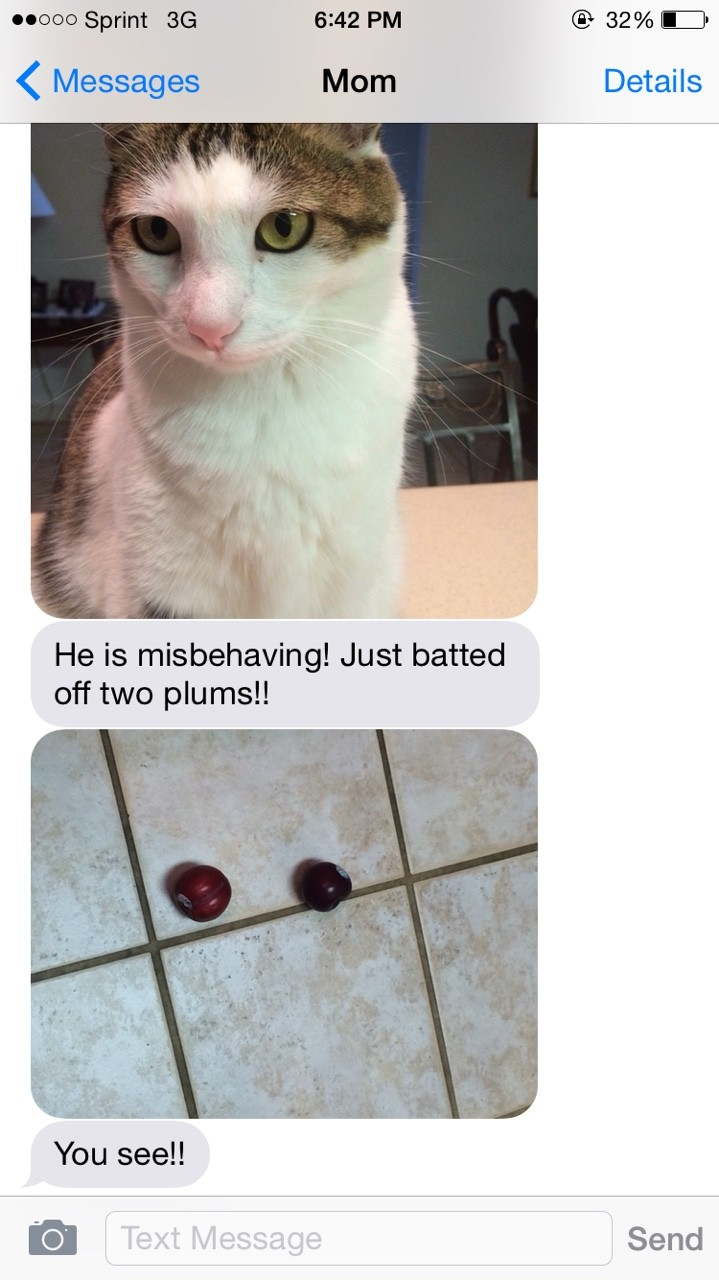 Bad Cat. . 4(: Messages Morn Details He is misbehaving! Just batted off two pm mall You see!!. somebody should punish that pussy