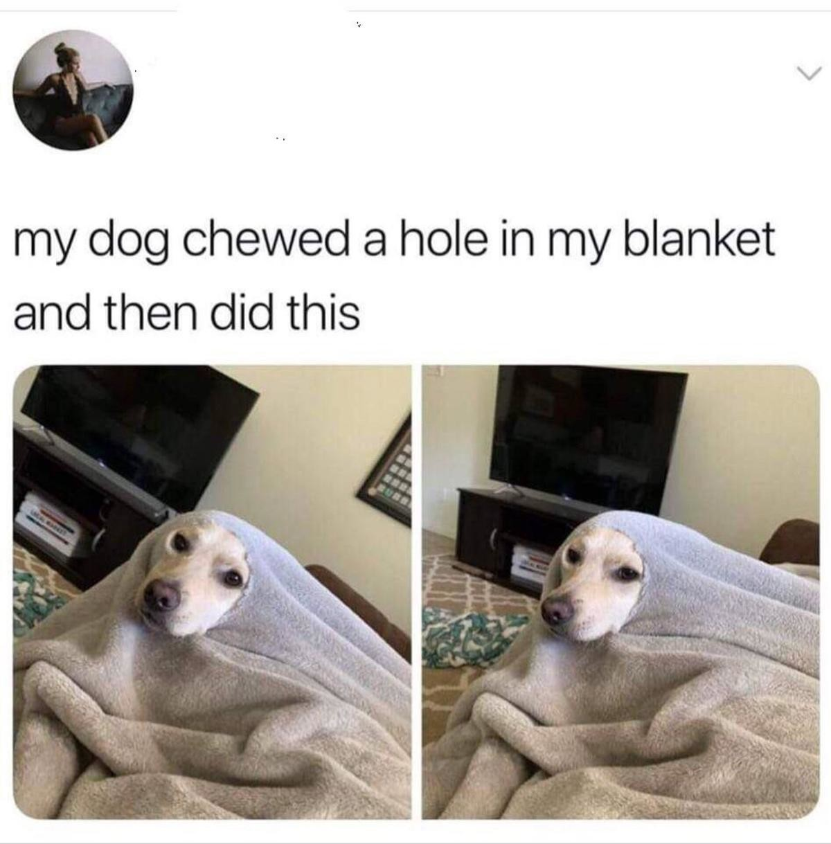 Blanket doggo. Pet your pet, now!.. >the barka is a symbol of empowerment