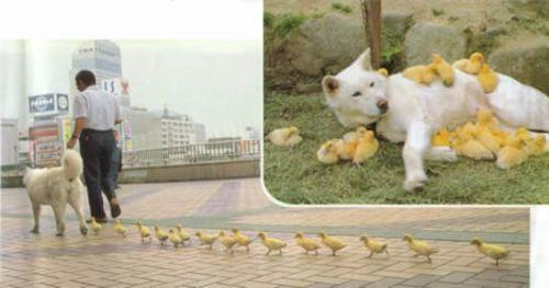 Chick Magnet. .. That's adorable! ^______^