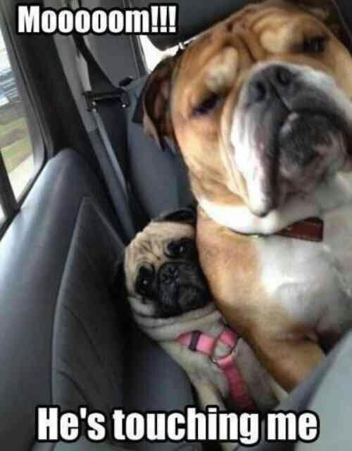Family Car Rides. . J, Pot tlt we is 2 He' s demising me'
