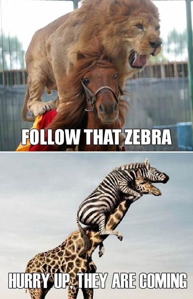 """Follow that Zebra!. not mine. at h IES, killed ya 'P I Erit Y. I all I"""" 1 itoi Ital. ur right its NOT urs! its mine! i got 4 thumbs. u got 5 times the amount of thumbs! http://funnyjunk.com/funny_pictures/2797247/hurry/"""