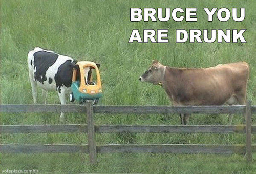 Get Your Together Bruce. I'm Sick Of Your . BRUCE YOU ARE DRUNK