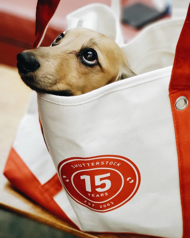 Good Dog. Credit : @fritz.schnackenpfefferhausen (instagram) Dog leave paw prints on your heart. ... cutie pie