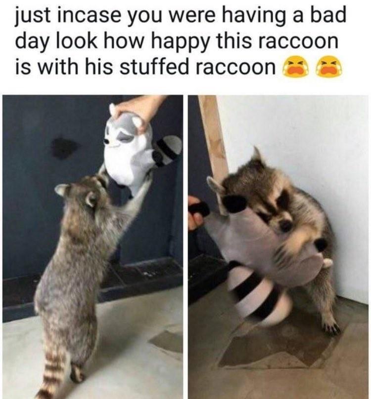 gyspsydude irl. . just incase you , ',, having ']. bad look how happy this raccoon is with his stuffed raccoon er! iii