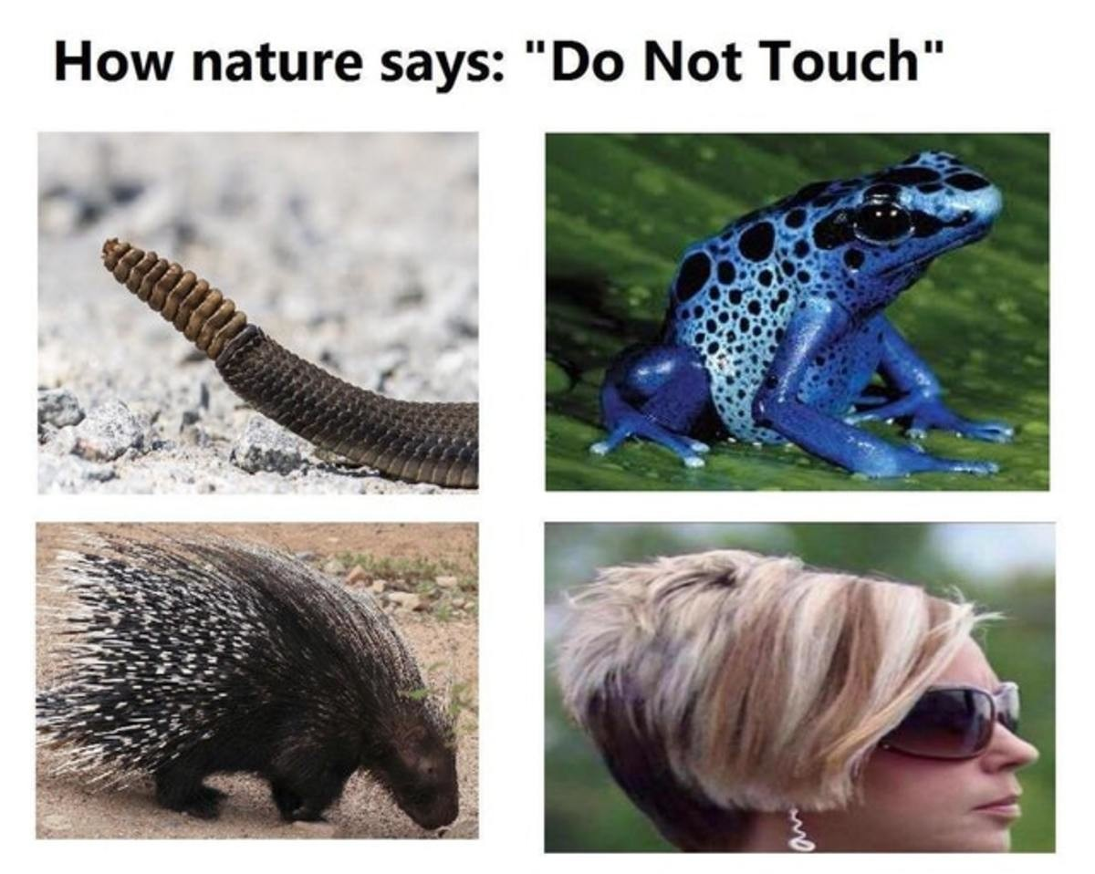 """How Nature Says """"Don't Touch"""". . nature says: """"Do Not Touch"""". I honestly don't know what it is about that goddamned haircut that makes my silly banoodley doodle apparatus revolutionise its form into that of a colossal adam"""