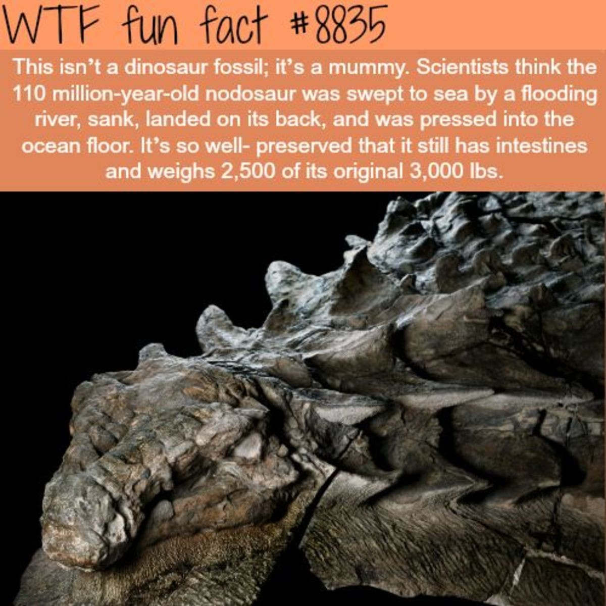 Mummy Dinosaur. .. if this is true there's a solid chance we'd be able to revive that species through the preserved dna