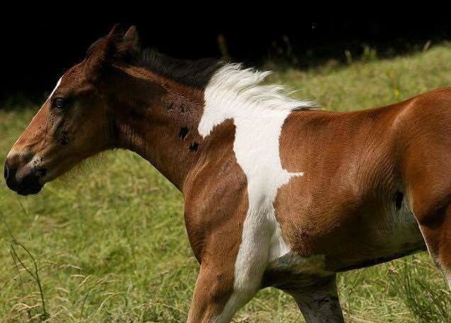 """Theres a Horse In This Horse. join list: Lewds4DHeart (1599 subs)Mention History join list:. As usual, posting some kind of lewds- bestiality this time, it seems. """"White horse fully inside a brown horse"""""""
