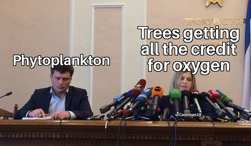trees. .. Trees are just flashier. Phytoplankton just doesn't have the same beauty as a tree. I blame the mainstream media and their beauty standards.