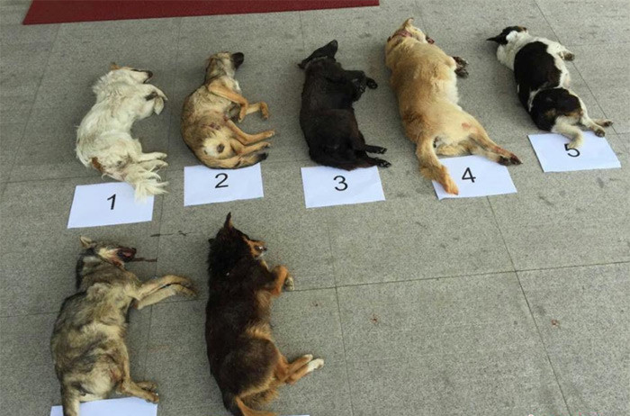 Two men killed over 100 dogs in China. Two men with crossbows killed over 100 dogs in Jiangsu. SOURCE: .. Is a prank bro... its a prank....